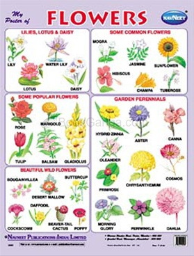 flowers name list in tamil - photo #10