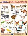 Navneet Big Wall Chart Domestic And Pet Animals