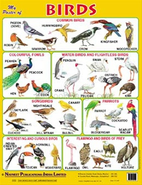 My poster Of Birds