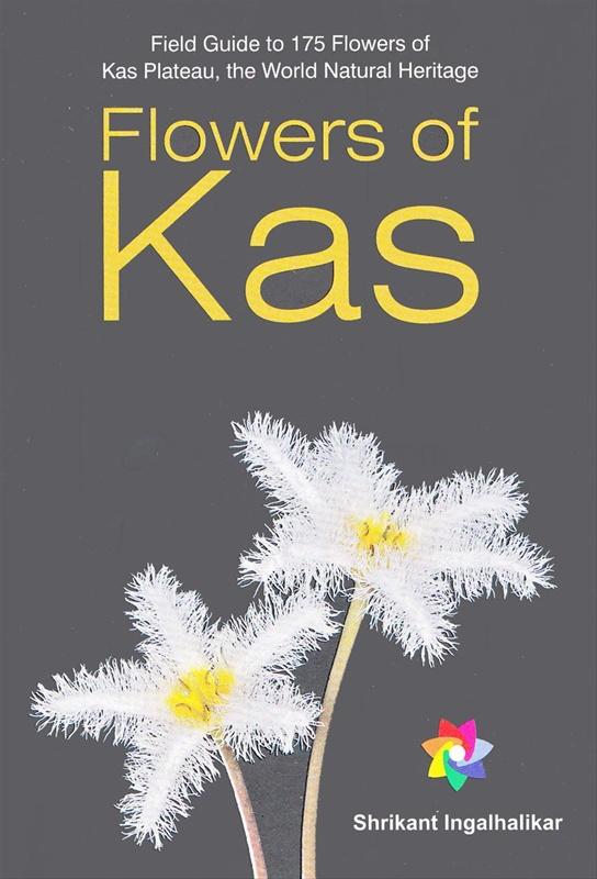 Flowers Of Kas