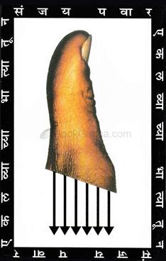 Ekalavyachya Bhatyatoon