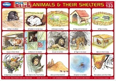 Pick 'n' Stick Animals And Their Shelters