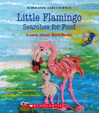Little Flamingo Searches For Food